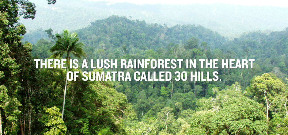 Save 30 Hills by WWF